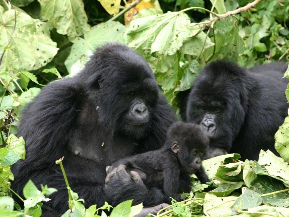 2 Days Rwanda Gorilla Tour