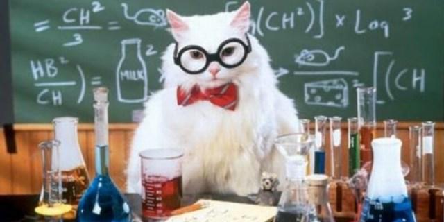 science cat