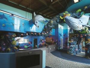 under the sea pediatric office design patterson today