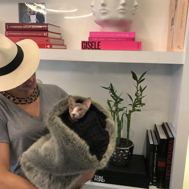 mark olson dds office cat
