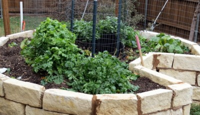 Successful Heirloom Gardening With NO Rain