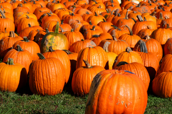 Fall Wallpaper Backgrounds Pumpkins New Ideas For Cooking Harvest Time Pumpkins Off The Grid