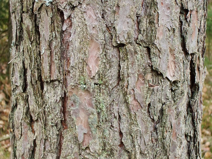 Image result for tree bark