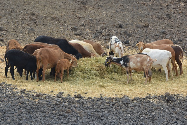 Is This The Best Low-Cost, Low-Maintenance Livestock You Can Own?