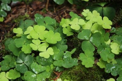3 Edible Fall Weeds That Are Super-Easy To Find (And Worth The Effort)