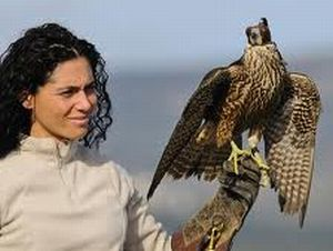 falconeria - I