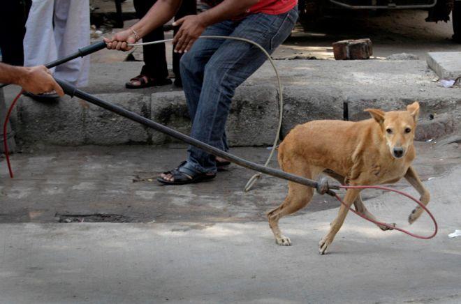 A Tortona ogni due giorni viene accalappiato un cane. Uno su 3 però non è randagio