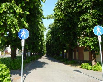 Acqui Terme, interventi e valorizzazioni della passeggiata lungo il viale in Corso Divisione
