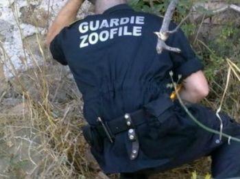 Tagliolo Monferrato, le guardie zoofile scoprono un allevamento con 22 cani morti e 4 moribondi