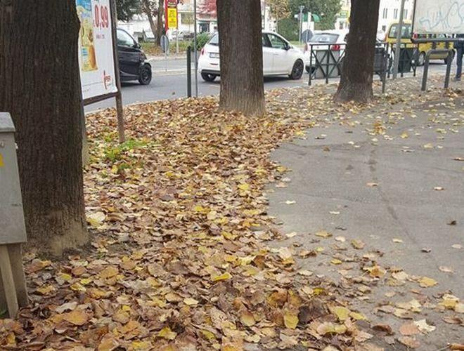 foglie 2