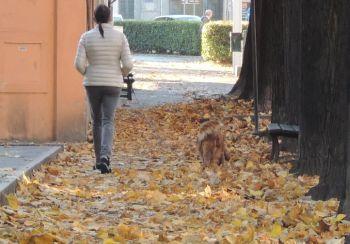 Il nostro aritcolo ha avuto effetto, Bardone sollecita la pulizia delle foglie