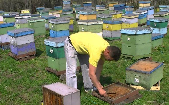 Le aperture estive del museo dell'apicultura a Novi
