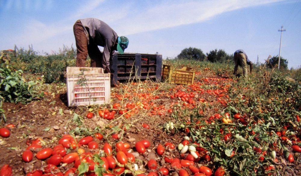 Tensione per i braccianti agricoli in Bassa Valle Scrivia, un ferito tra i scioperanti