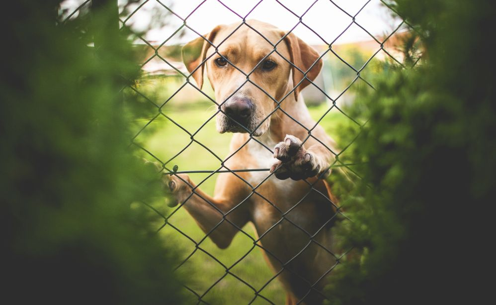 Morreale solleva dubbi sulla Garante degli animali di Tortona: è incompatibile e non ha fatto nulla?