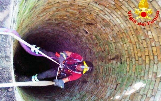 Cucciolo di capriolo finisce in un pozzo alla periferia di Tortona, salvato dai Vigili del Fuoco