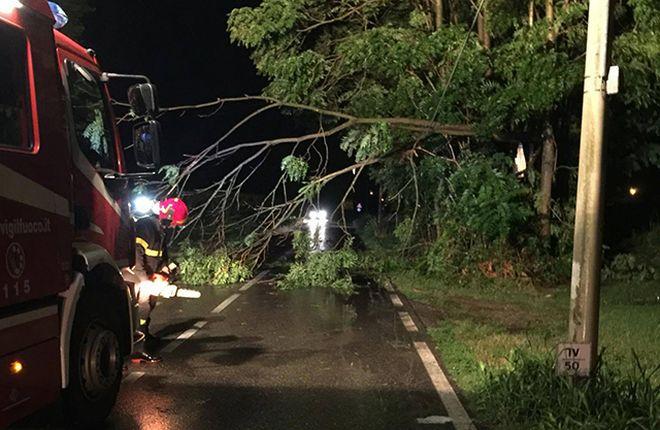 A Novi Ligure il vento fa cadere rami di alberi creando problemi alla circolazione stradale