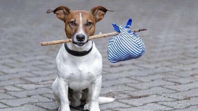 Il Comune di Alessandria lancia una campagna informativa contro l'abbandono degli animali
