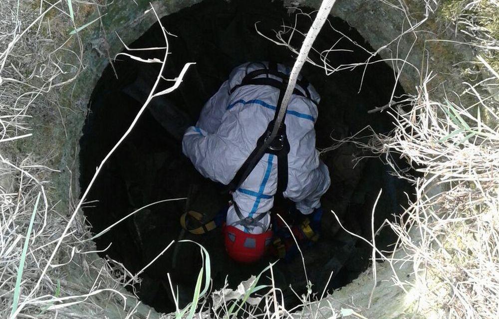 I Vigili del Fuoco di Tortona salvano una pecora caduta in un pozzo da due settimane a Rivalta Scrivia