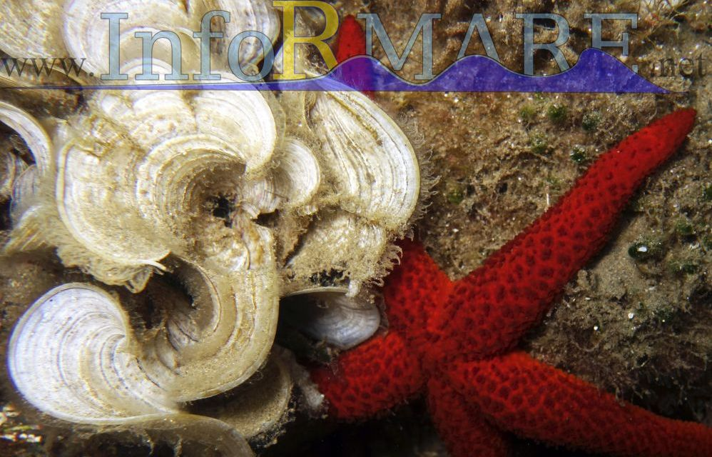 L'associazione InforMare di Imperia insegna educazione ambientale nelle scuole di Andora