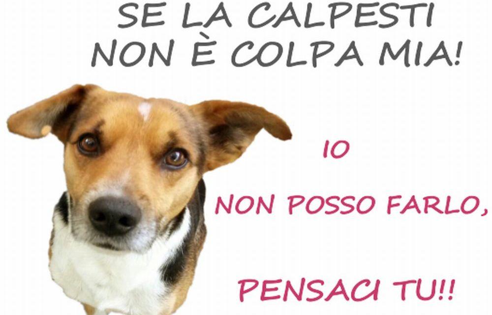 A Tortona parte una campagna per sensibilizzare i proprietari a raccogliere gli escrementi dei loro cani