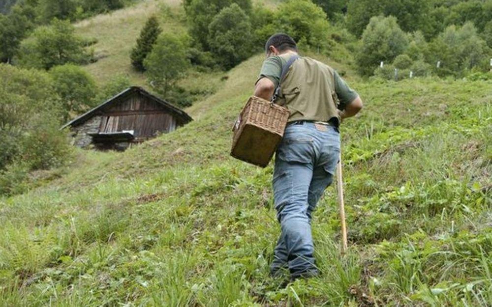 Anziano di 87 anni va a cercare i funghi a Caldirola e si perde nei boschi dove passa la notte, salvato dai pompieri