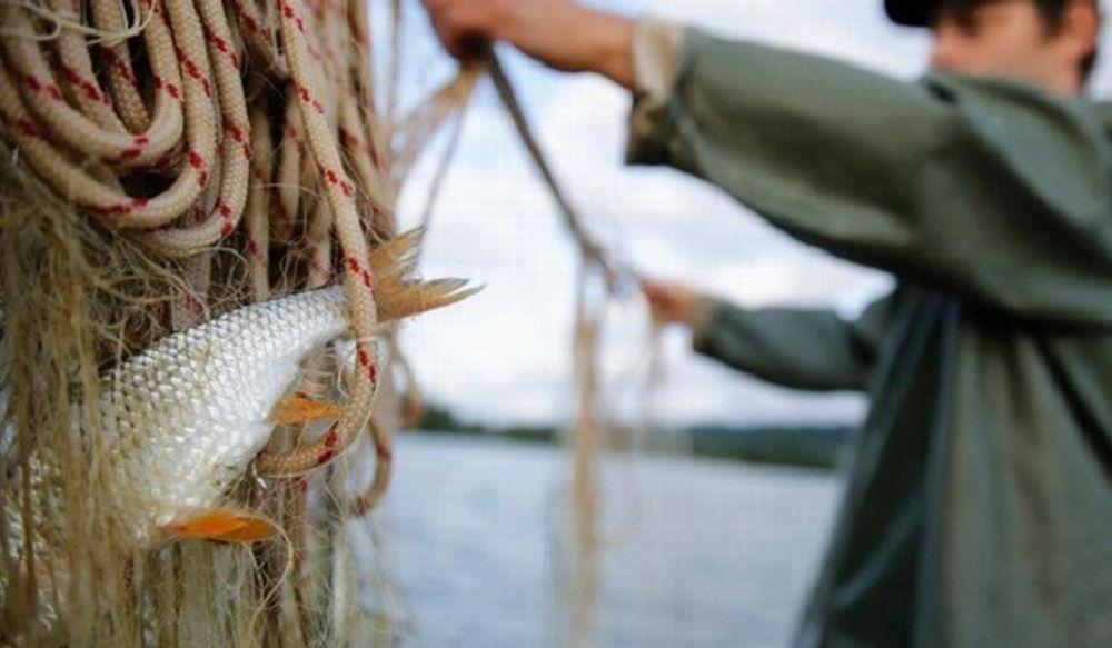 """La qualità del pescato ligure in vetrina ad """"Azzurro Pesce D'Autore"""":"""