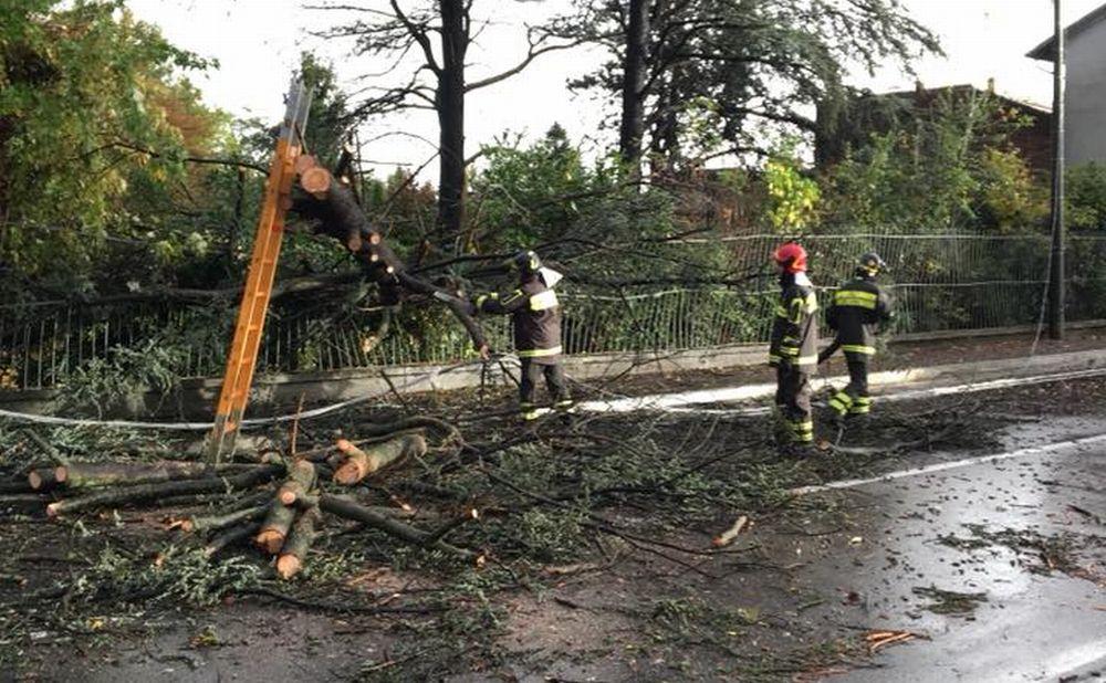 A Castelnuovo Scrivia albero caduto e un cavo elettrico tranciato
