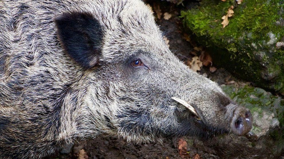 Fauna selvatica: troppi incidenti, non sono solo un problema del mondo agricolo ma della società