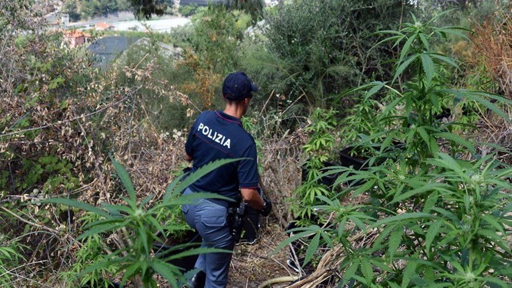 Ventimiglia, blitz antidroga dei Carabinieri: italiano denunciato per coltivazione di canapa