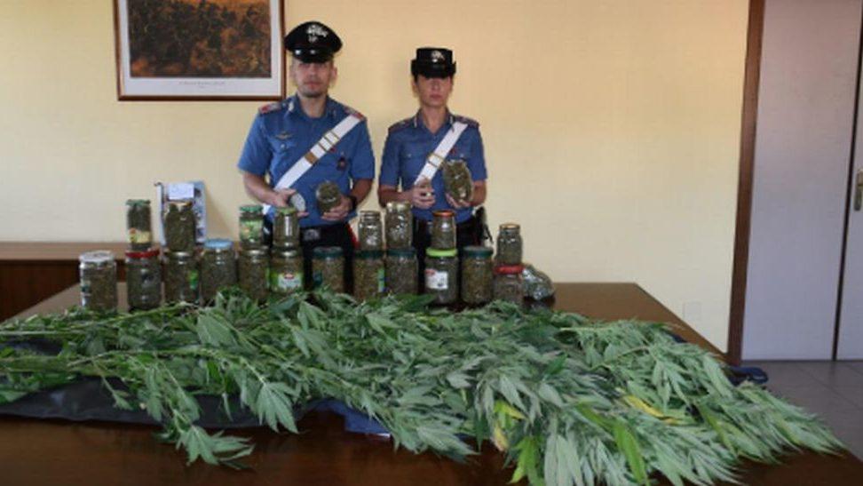 60enne novese coltivava questa marijuana nel giardino di casa