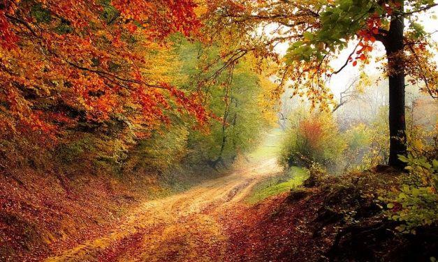 Online la carta d'identità degli alberi piemontesi
