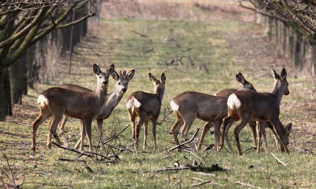 Fauna selvatica: per Confagricoltura è un'emergenza non più rinviabile