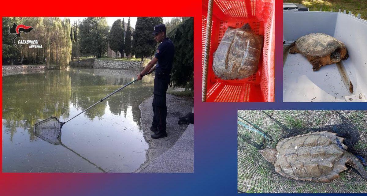 I Carabinieri di Imperia trovano tre tartarughe pericolose