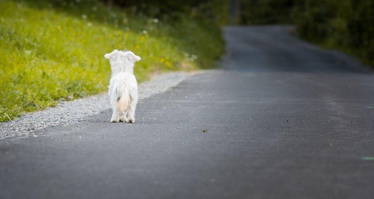 A Tortona al via la nuova campagna di sensibilizzazione contro gli abbandoni degli animali durante l'estate