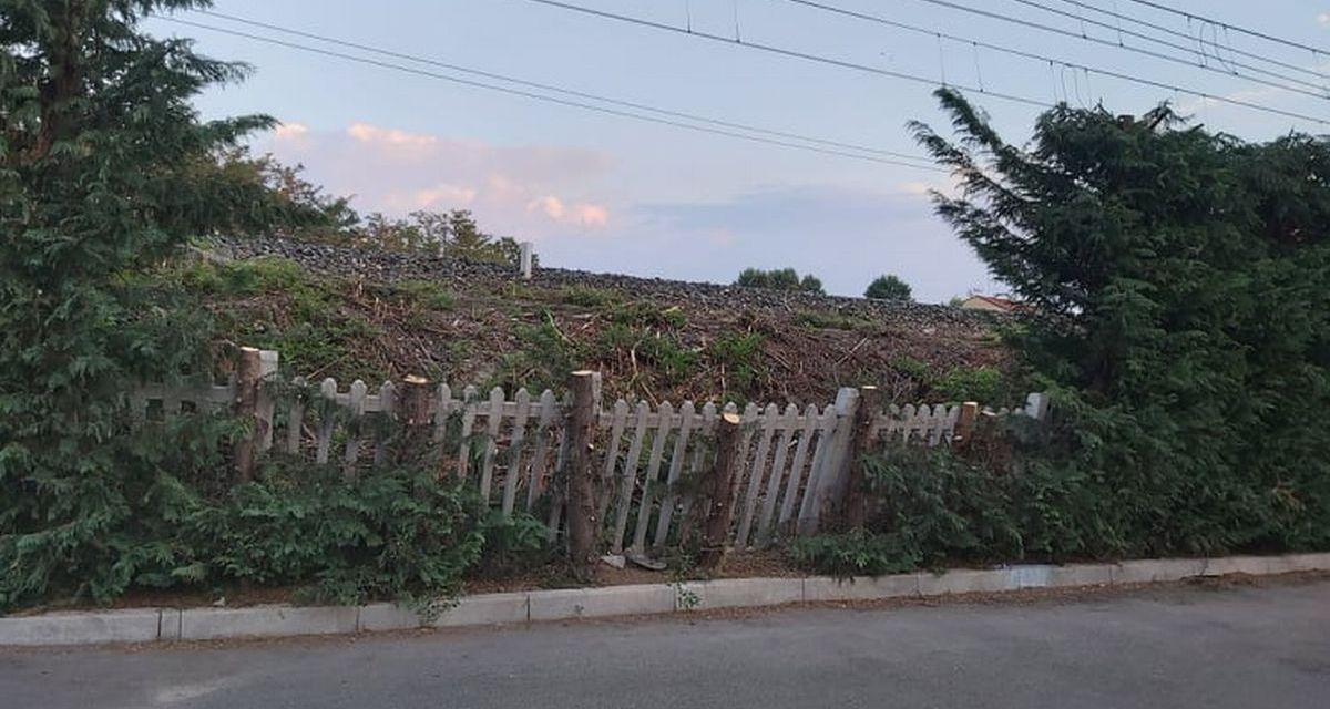 Orribile scempio di piante tagliate a Tortona, la segnalazione di un lettore