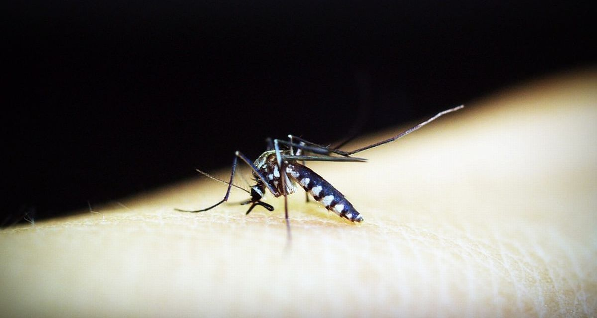 Alessandria dichiara guerra alla zanzara tigre