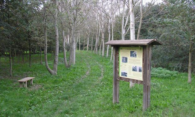 Valenza entra nel programma di Foresta condivisa del Po