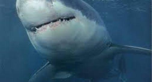 C uno squalo in mare allarme a Jesolo  Oggi Treviso  News  Il quotidiano con le notizie