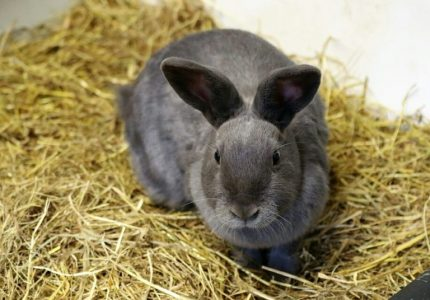 Rabbit Farming in Nigeria (How to Start & Make Money)