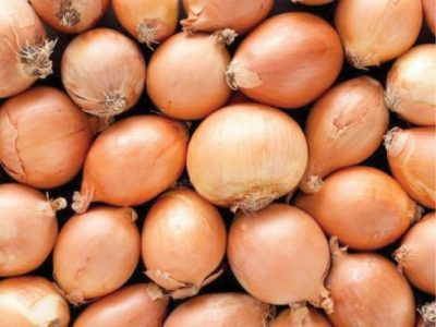 What You Should Know About Onions, Garlic and Leeks