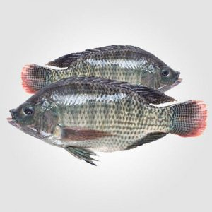 Cage Culture Tilapia: A Way of Tackling Tilapia Deficit