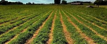 Controlling Your Farm's Weed With Cover Crops