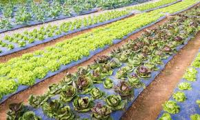 The Importance of Ecological Farming