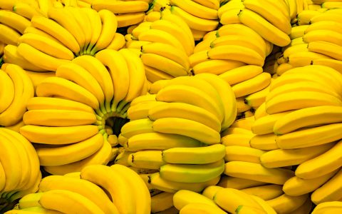 How to Cultivate Bananas