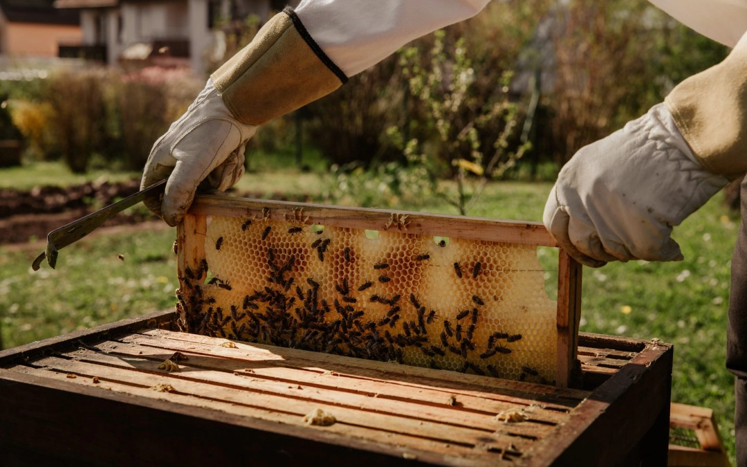 Five Important Steps to Running a Profitable Beekeeping Business in Nigeria