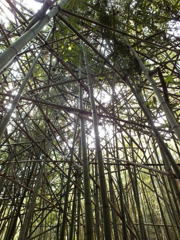 Big Bambu - Teshima - 05