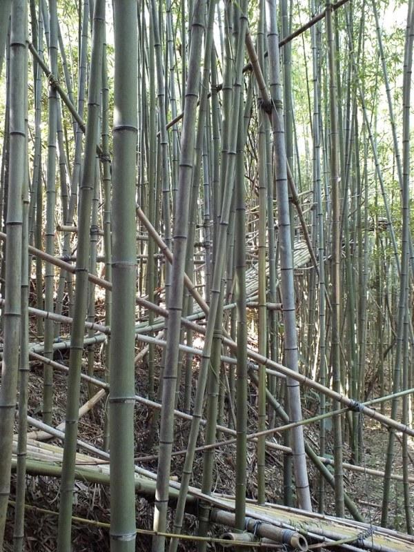 Big Bambu - Teshima - 07