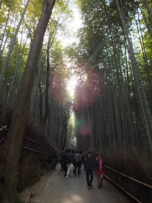 Bambous Arashiyama - 12