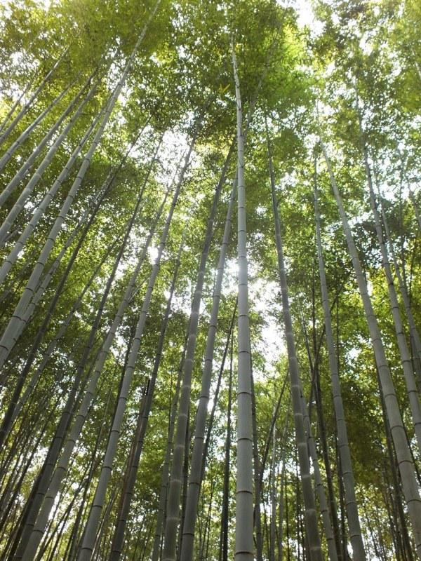 Bambous Arashiyama - 14