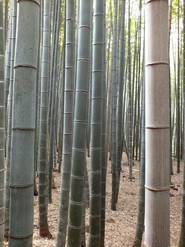 Bambous Arashiyama - 15
